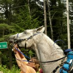 A shot by Deanna Ramsey from the 2014 Vermont 100. Lyte Nows given at a crew stop on trail.
